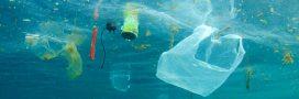 RecycleToCoin: l'appli blockchain pour lutter contre le plastique dans les océans