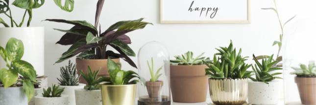 Calendrier des plantes d'intérieur: que faire en novembre?