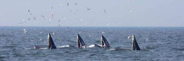 Consternation : la CITES échoue à interdire les importations de viande de baleine