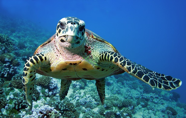 Portrait tortue aquatique