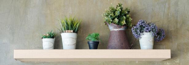 Plantes d'intérieur astuces naturelles pour purifier l'air
