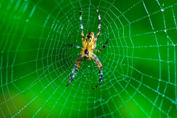 araignee, graphene, toiles d'araignées
