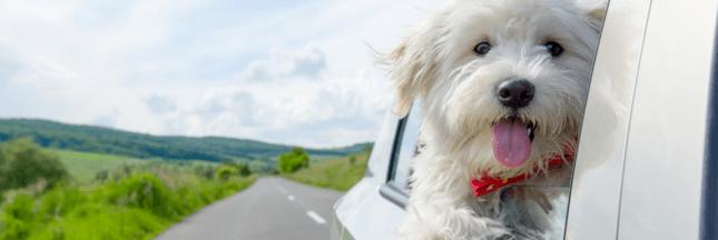 7 conseils pour voyager avec son chien ou son chat en voiture