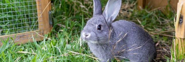 Cinq questions à Jean-Louis Chevalier, éleveur de lapins à Beaupréau