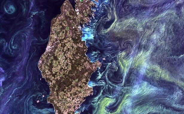 Les phytoplanctons autour du Gotland vus de l'espace