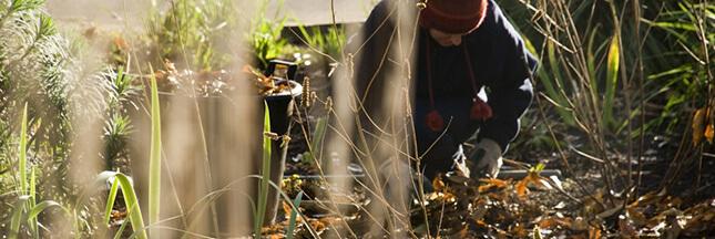 jardin hiver que planter en décembre