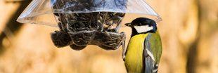 Pourquoi et comment nourrir les oiseaux en hiver ?