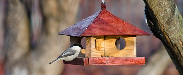 nourriture oiseau: nourrir les oiseaux en hiver