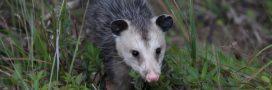 La liste rouge des plantes et des animaux en danger d'extinction s'allonge