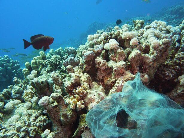 ONU déchets plastiques océan