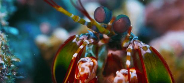préserver les océans