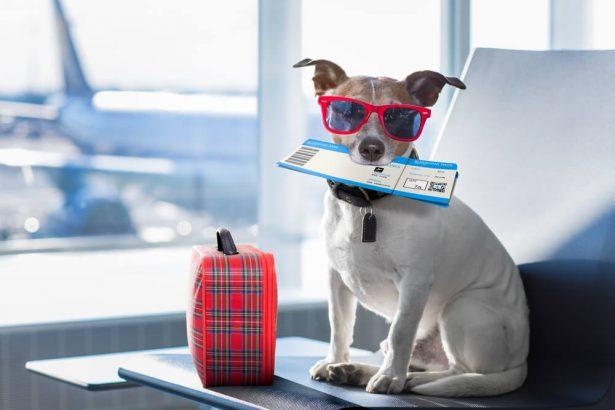 chien, avion, mal des transports remèdes