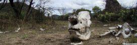Au Zimbabwé, des femmes engagées contre le braconnage