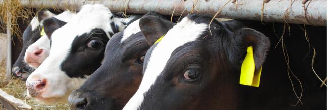 Taxer la viande pour son impact sur la santé et le climat, bientôt une réalité ?