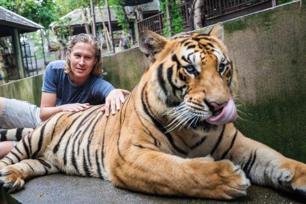 Un tigre forcé de rugir pour les selfies des touristes en Thaïlande