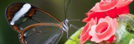 Top 10 des animaux translucides les plus envoûtants