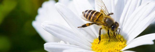Déclin des pollinisateurs : une consultation publique est lancée