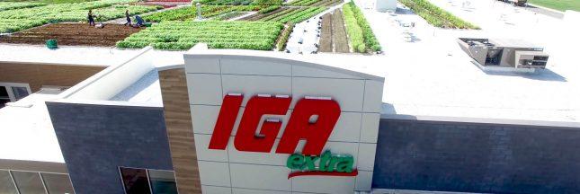 Canada: un supermarché cultive ses propres légumes directement sur son toit