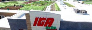 Canada : un supermarché cultive ses propres légumes directement sur son toit