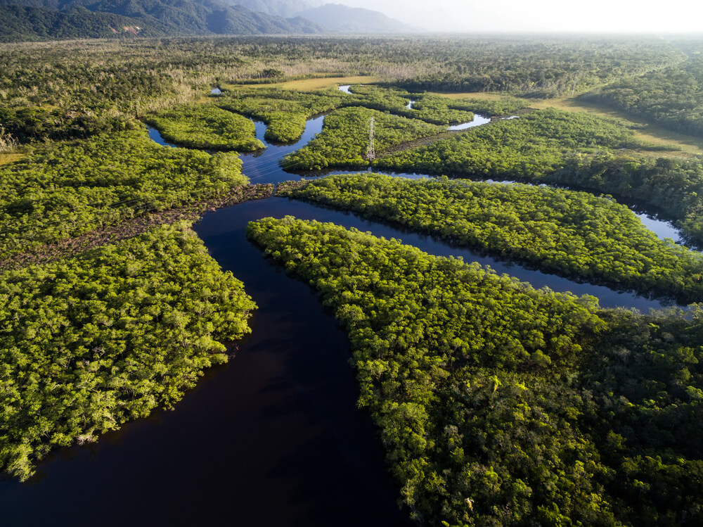 amazonie, nouvelles merveilles de la nature