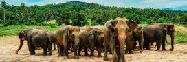 Les animaux d'Afrique, victimes collatérales des conflits