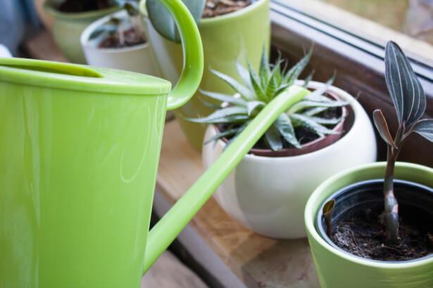 plantes intérieur janvier