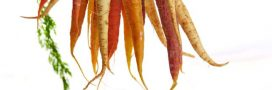Votre bonne résolution 2018: manger plus de fruits et de légumes par jour