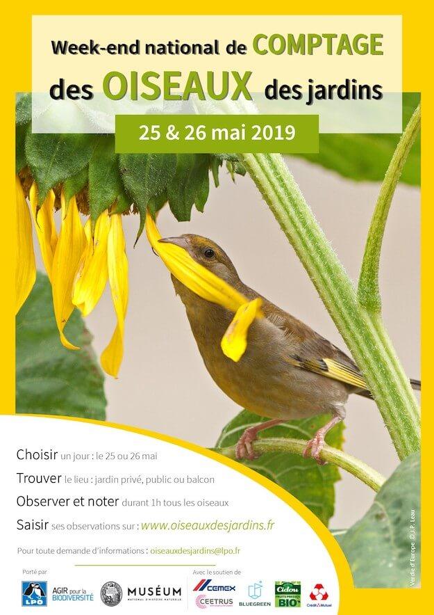 comptage oiseaux