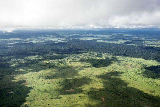 sao paulo, déforestation amazonie