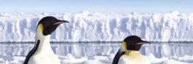 Dérèglement climatique: les animaux en première ligne