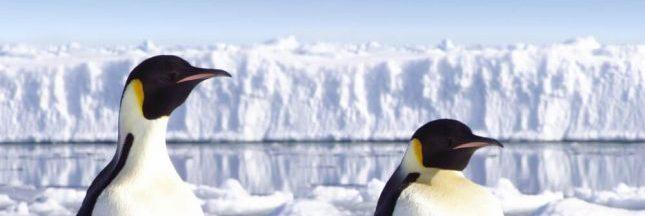 Dérèglement climatique : les animaux en première ligne