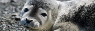 Les animaux marins, victimes des tempêtes de l'hiver