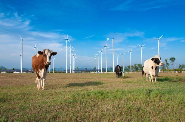 filière éolienne en France, énergie éolienne, France