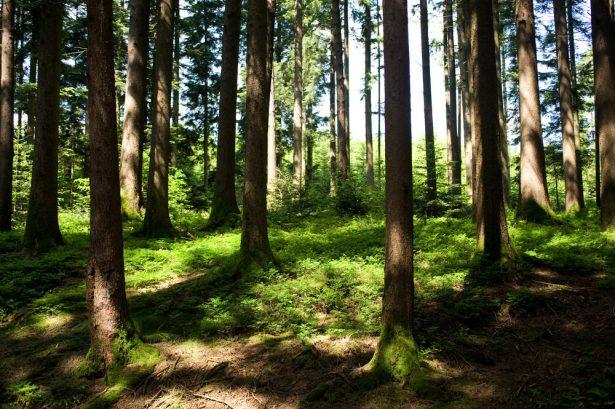 forêt, Angleterre