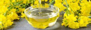 L'huile de colza, championne des oméga-3