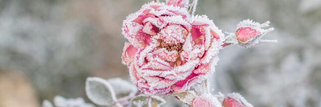 Découvrez tout ce qu'il faut faire au jardin en janvier
