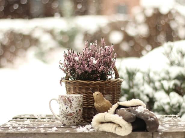 jardin en janvier