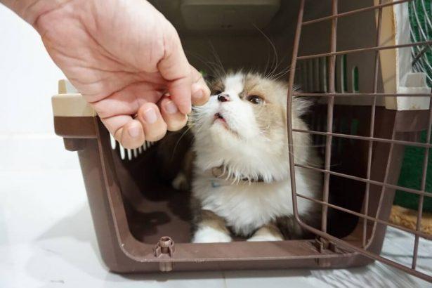 mal des transports des animaux