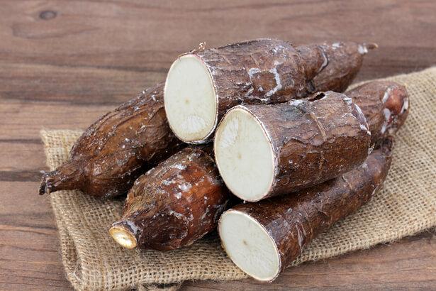 manioc dangereux