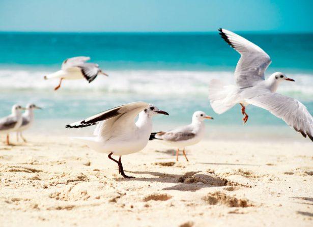 oiseaux aquatiques, mouettes