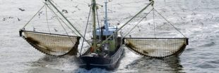 La pêche électrique définitivement interdite en Europe... en 2021