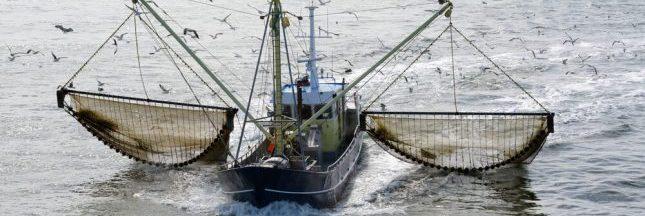 La pêche électrique interdite dans l'Union européenne