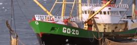 Pêche électrique: inquiétude autour d'une possible légalisation