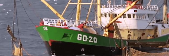 Pêche électrique : inquiétude autour d'une possible légalisation