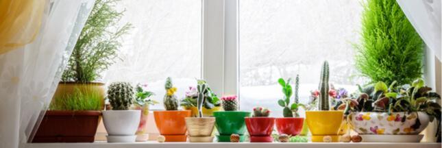 Les soins à apporter aux plantes d'intérieur en janvier