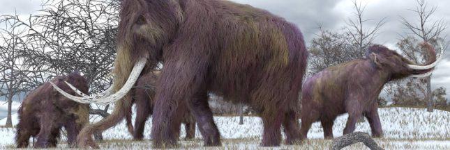 Pleistocene Park: des mammouths contre le réchauffement climatique?