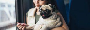 Prévenir le mal des transports des animaux de compagnie
