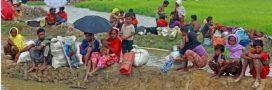 L'exil des Rohingyas entraîne un désastre écologique