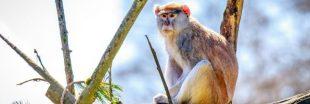 13 singes périssent dans l'incendie d'un parc animalier en Angleterre