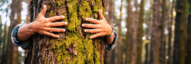 Jardinage d'hiver, nettoyez les troncs de vos arbres fruitiers